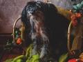 Hundporträtt, Fotograf Evelina Eklund Hassel i Jönköping, Småland