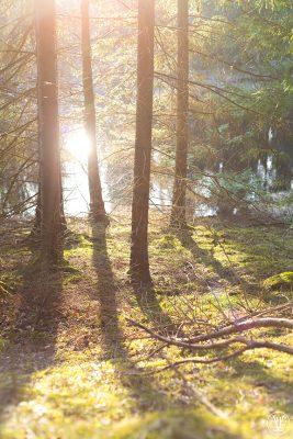 träd, Fotograf Evelina Eklund Hassel i Jönköping