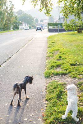 hundar, Fotograf Evelina Eklund Hassel i Jönköping och Karlstad