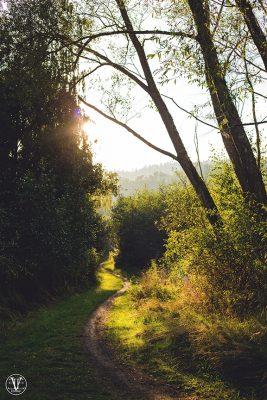 stig i solnedgång, Fotograf Evelina Eklund Hassel i Jönköping och Karlstad